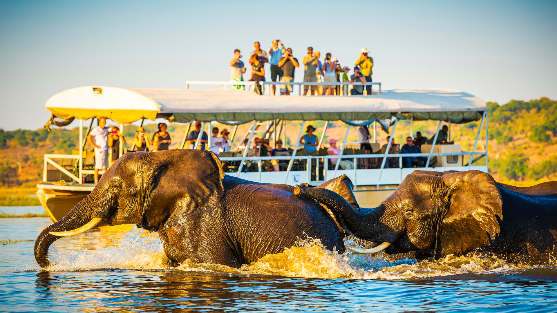 36 - The Ultimate Dream Holiday: Is an African Safari Right for You?